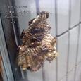 2006.08.17.大泉学園-1.実家.コアシナガバチ.1