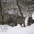 2007.01.28.奥日光-奥日光.小田代橋&湯川