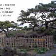 2007.02.11.初島-4.初島.海鳴りの松