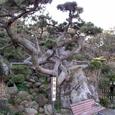 2007.02.11.初島-4.初島.石割の松