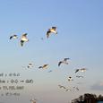 2007.02.11.初島-5.初島~熱海.カモメ.1