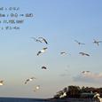 2007.02.11.初島-5.初島~熱海.カモメ.2