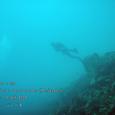 2007.06.10.Menjangan-1.Coral Garden.nmr