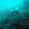2007.06.10.Menjangan-1.Coral Garden.ytyrk