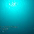 2007.06.10.Menjangan-2.Turtle Wall.1