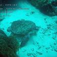 2007.06.10.Menjangan-2.Turtle Wall.アオウミガメ.3