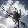 2007.06.11.Bali-1.Kuta.ココヤシ