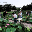 2007.07.08.行田-古代蓮の里.AKR&FSY.1
