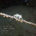 2008.08.14.井田-2.井田ビーチ.ビシャモンエビ