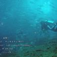 2007.06.09.Tulamben-1.Liberty Wreck.ギンガメアジ(群れ).3