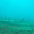 2007.06.09.Tulamben-2.Liberty Wreck.チンアナゴ.1