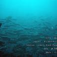 2007.06.09.Tulamben-2.Liberty Wreck.ギンガメアジ(群れ).3